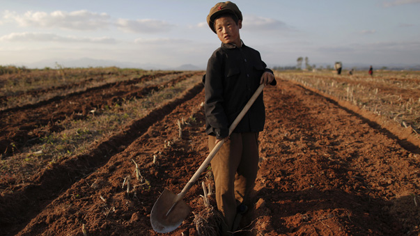 A North Korean boy works in a field of a collective farm in the area damaged by summer floods and typhoons in South Hwanghae province